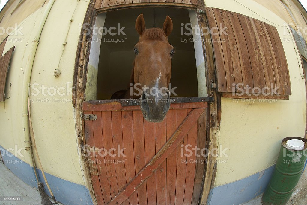 Race Horse Series stock photo