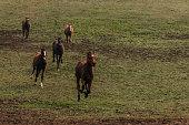 Race Horses Running in The Autumn