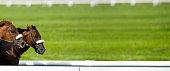 istock Race Horses Running Nose-to-nose - panorama 171158533
