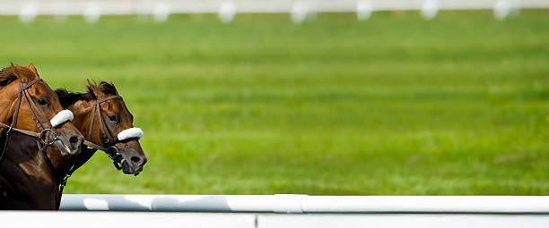 Race Horses Running Nose-to-nose - panorama stock photo