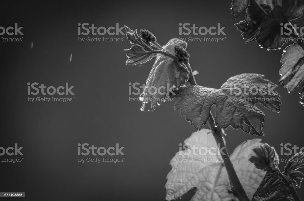 Race of poets royalty-free stock photo