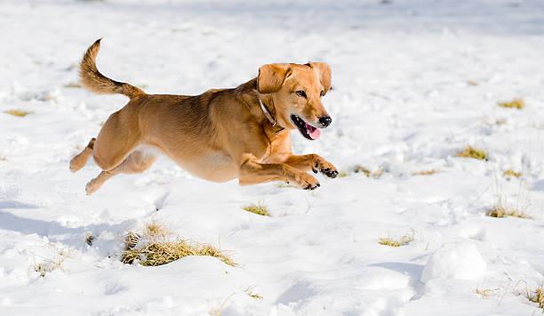 Race through the snow picture id174759598?b=1&k=6&m=174759598&s=612x612&w=0&h=zda124m0wiqfx5 fpugj0kataownzvwsfcxtrsgw3 c=