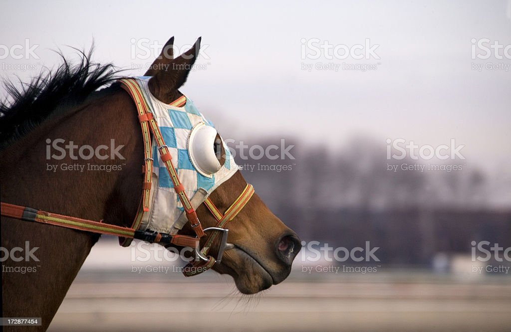 Racehorse Galloping with Blinkers stock photo