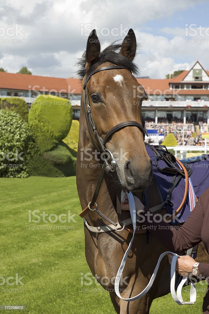 Racehorse stock photo