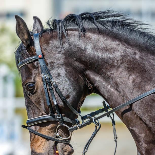 Cheval de course - Photo