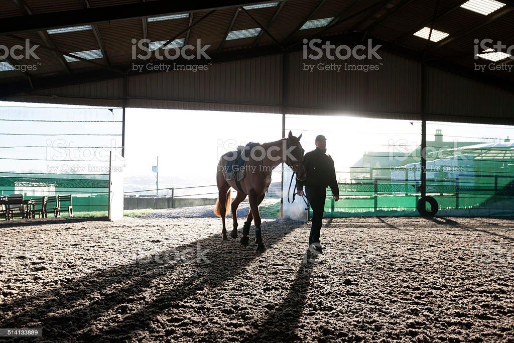 Racehorse, winter stock photo