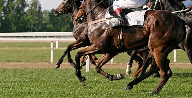 Racehorses picture id185105281?b=1&k=6&m=185105281&s=612x612&w=0&h=jy5ovwnttqre5ta1rfwatwuu pihh2ar7hjyswe19be=