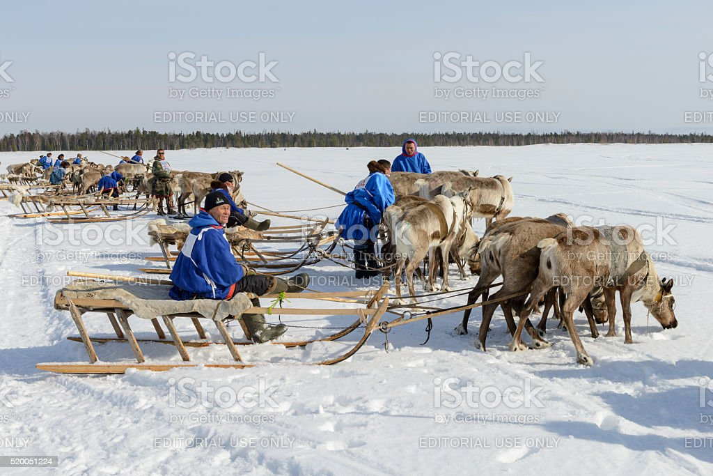 races on reindeer sled in the Reindeer Herder's Day stock photo