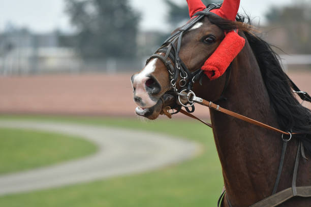racing horse - horse bit stock pictures, royalty-free photos & images