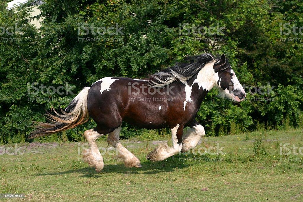 Racing horse stock photo