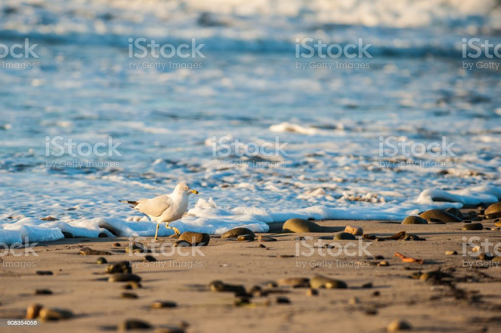 Racing with the breaking waves. stock photo