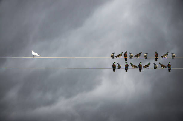 Racism concept, White and Black birds on wire stock photo