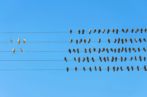 Racism concept, White and Black birds on wire