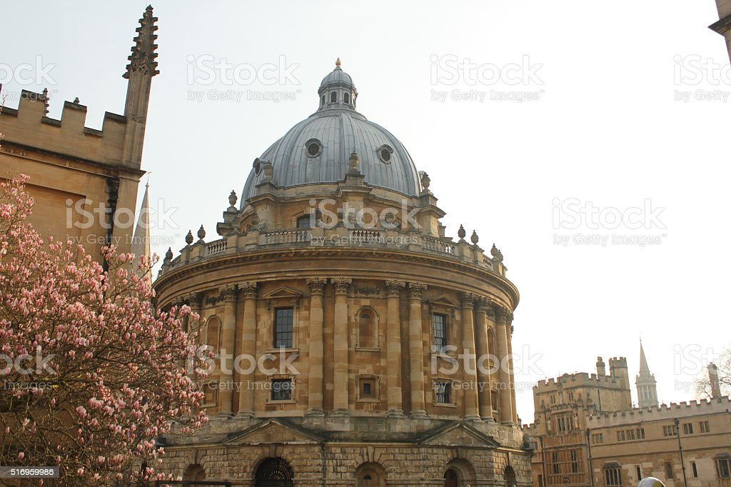 Radcliffe Camera in Radcliffe Square Oxford with a Blossom tree stock photo