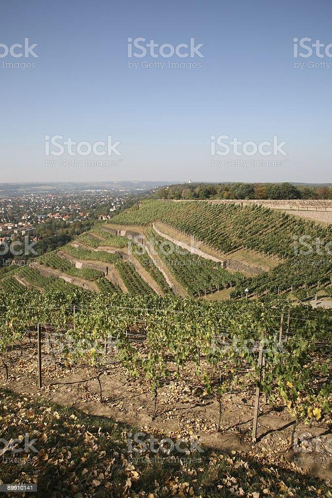 Viñedos Radebeul en otoño foto de stock libre de derechos