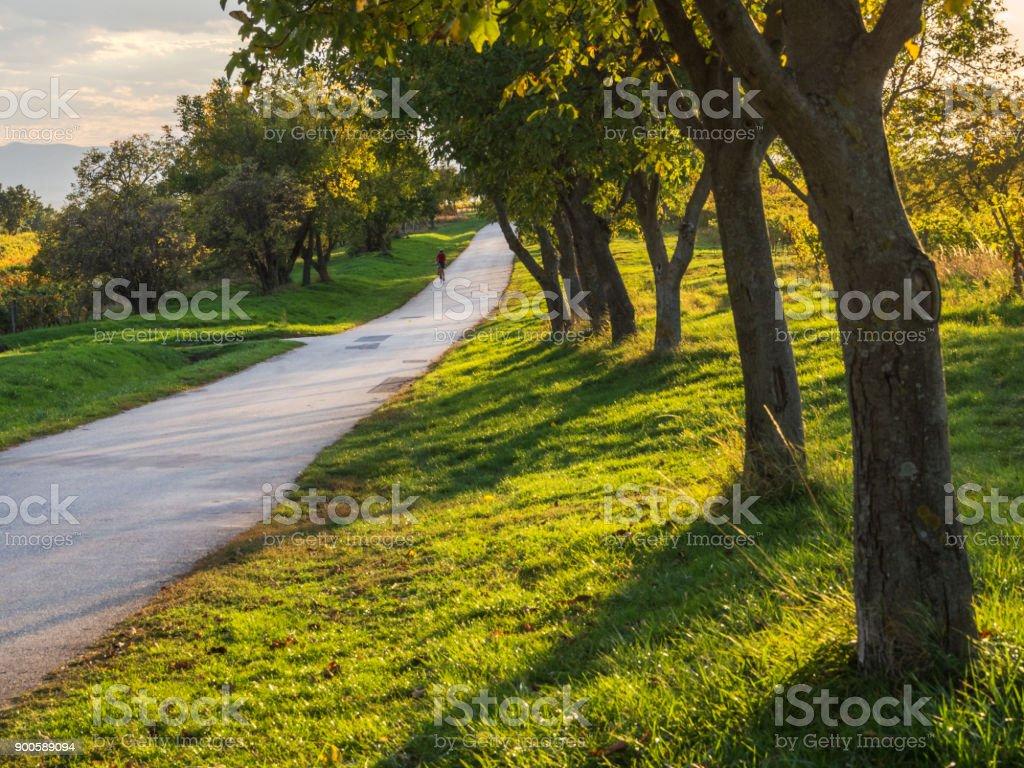 Radfahrer Auf Einem Radweg Fährt Eine Allee machen Im Herbst – Foto