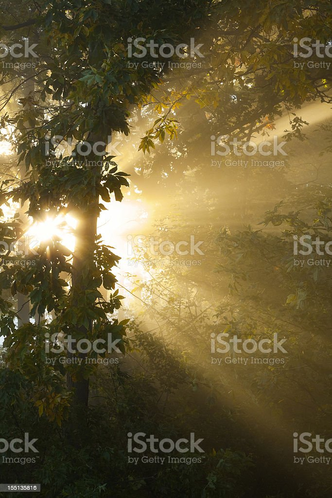 Radiant Rays of Sunrise in Foggy Forest royalty-free stock photo