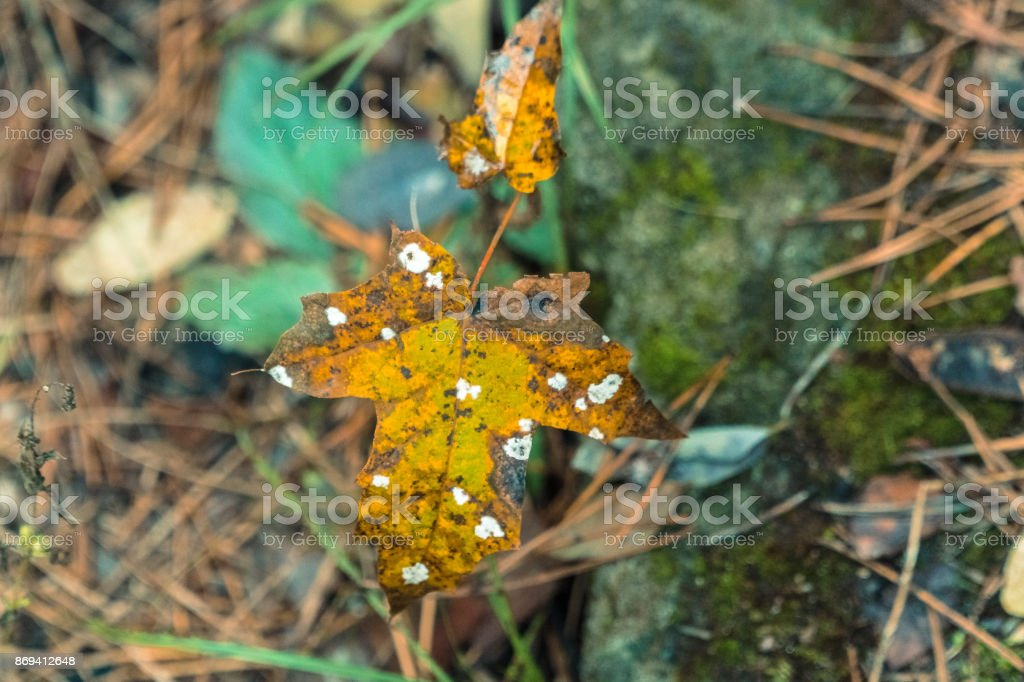 Radiation. Leaf in unknown spots stock photo