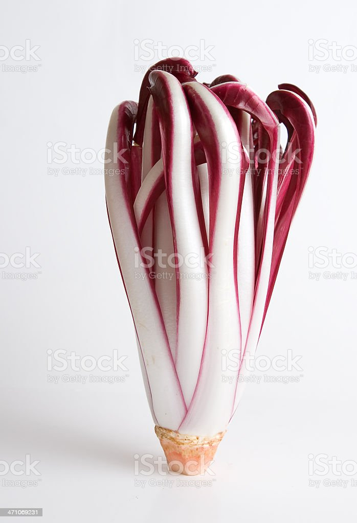 Radicchio royalty-free stock photo