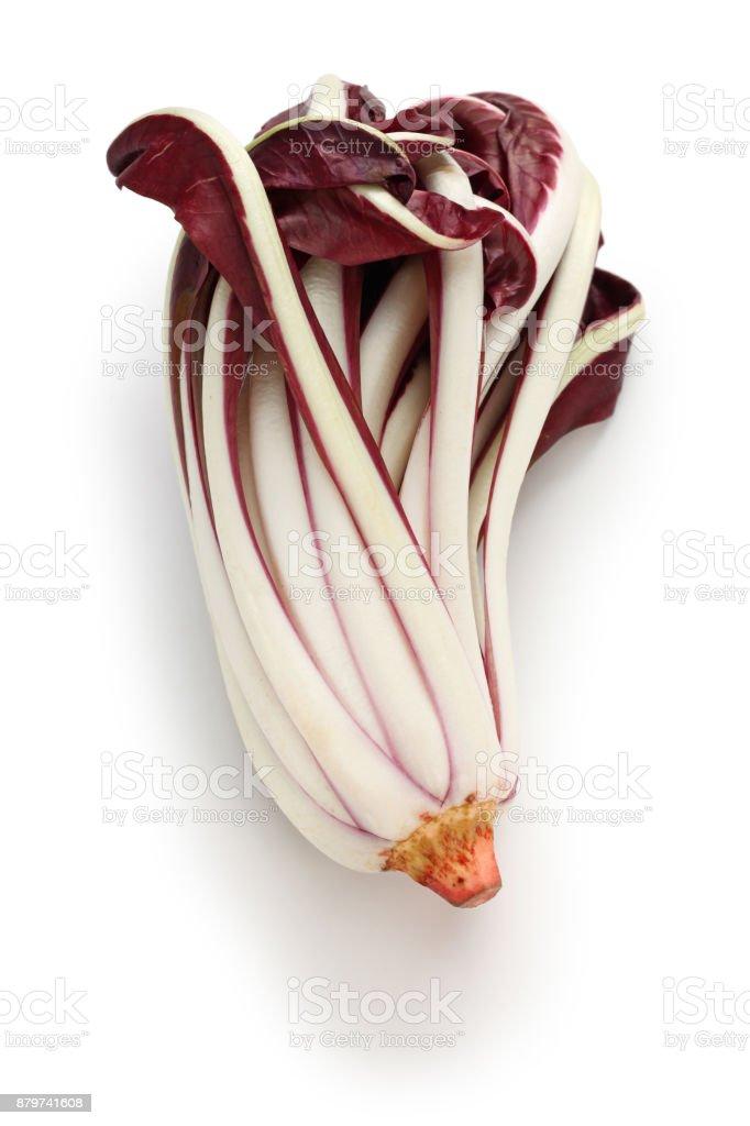 radicchio rosso di treviso tardivo, italian red chicory isolated on white background stock photo