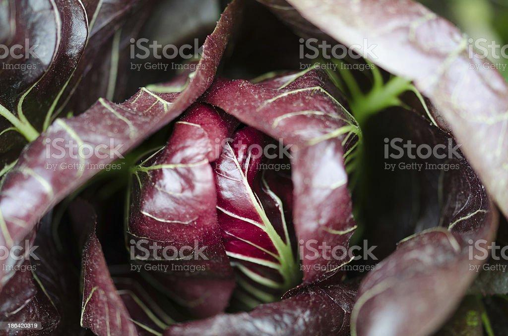 Radicchio rosso salad stock photo