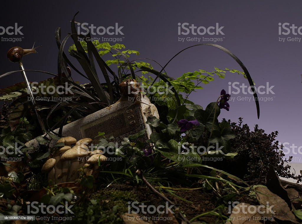 Radio stuck in mud with flora, close-up royalty-free stock photo
