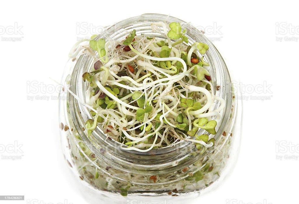 Rettich und Alfalfasprosse sprouts – Foto