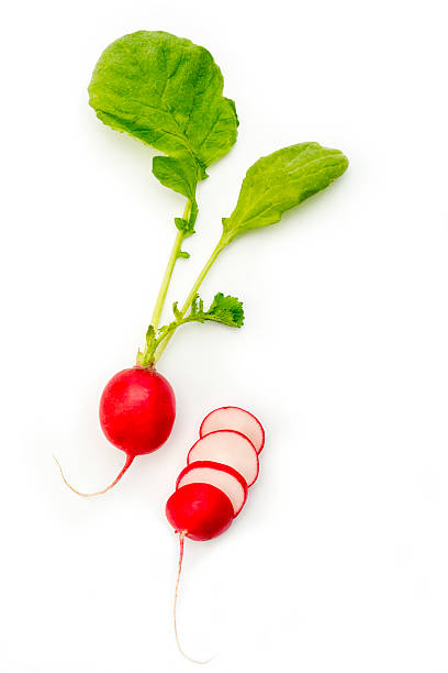 Radish on a white background stock photo