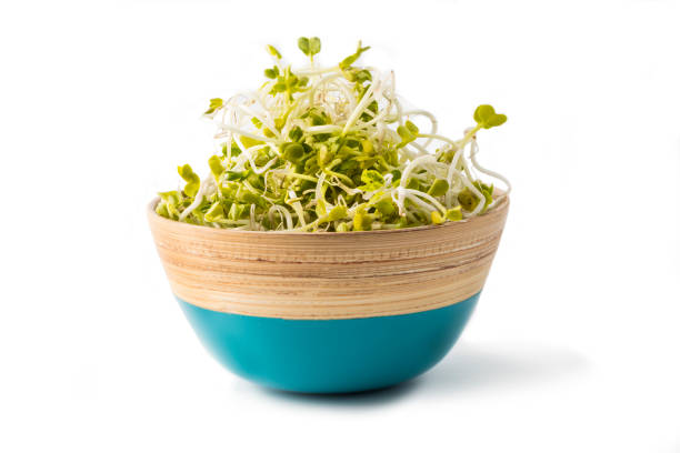 radish seeds and buds in bowl on white stock photo