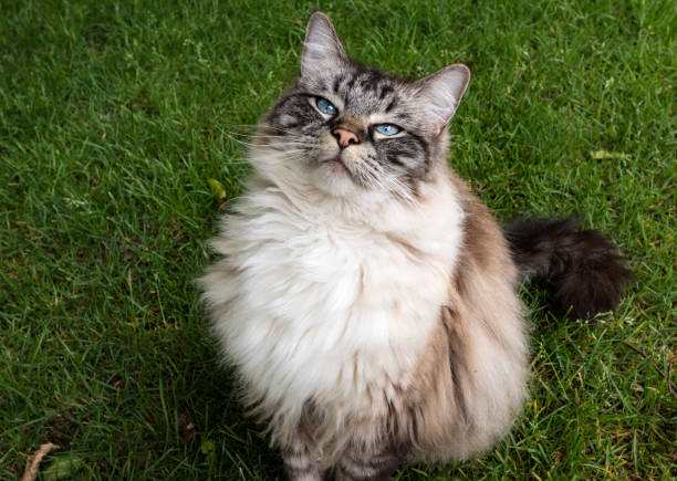Radoll cat picture id857725016?b=1&k=6&m=857725016&s=612x612&w=0&h=yy gyhulajrvgxohbddmii2cch69sna0tbfyvk ux 4=