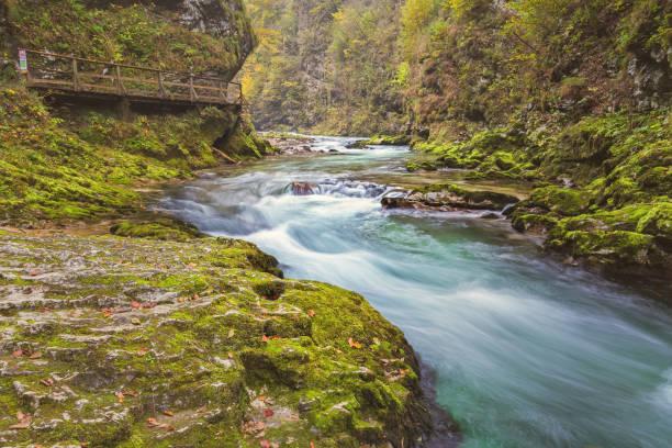 Radovna river in Slovenia in autumn stock photo