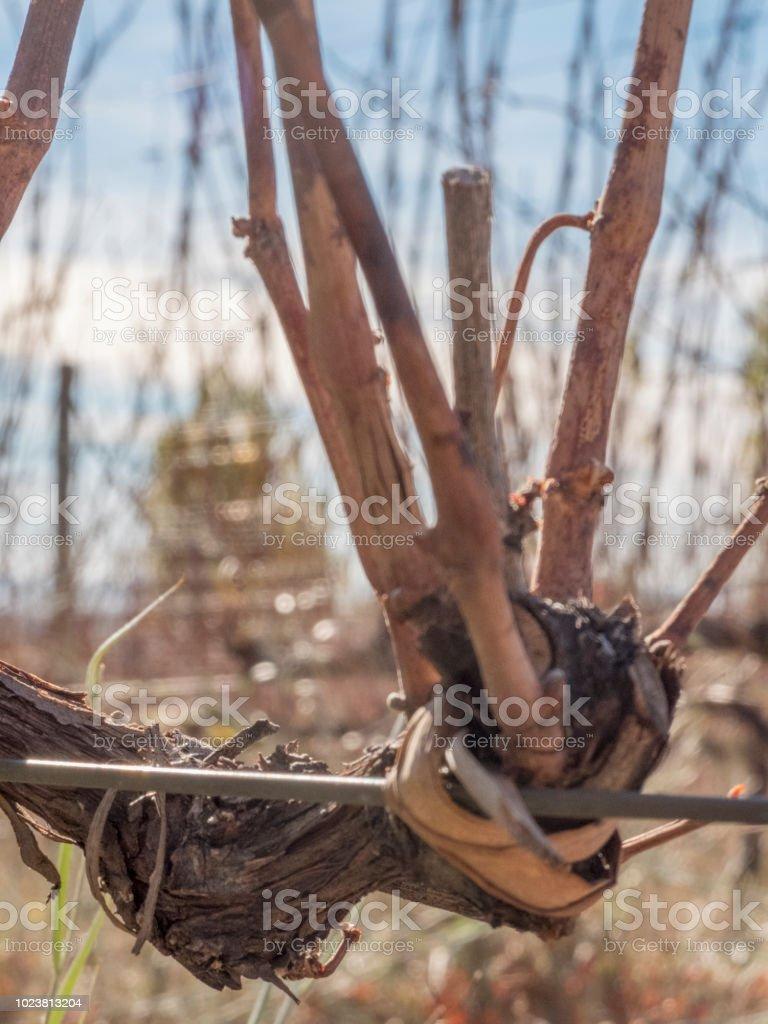 Rafia - foto de stock