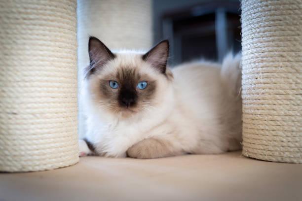 Cat de lucy Independent, Handmade,