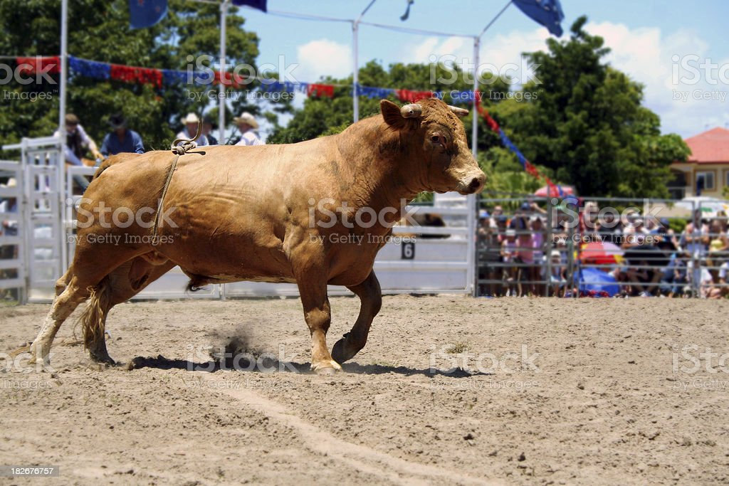 Raging Bull stock photo