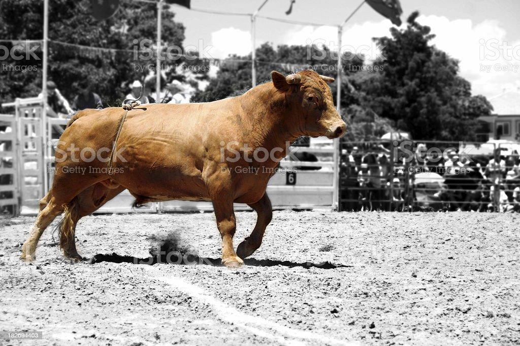 Raging Bull v2 royalty-free stock photo