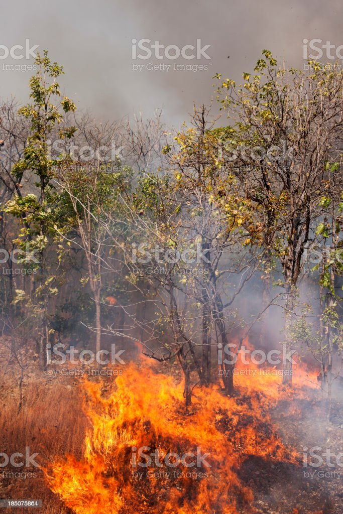 Raging forest fire. stock photo