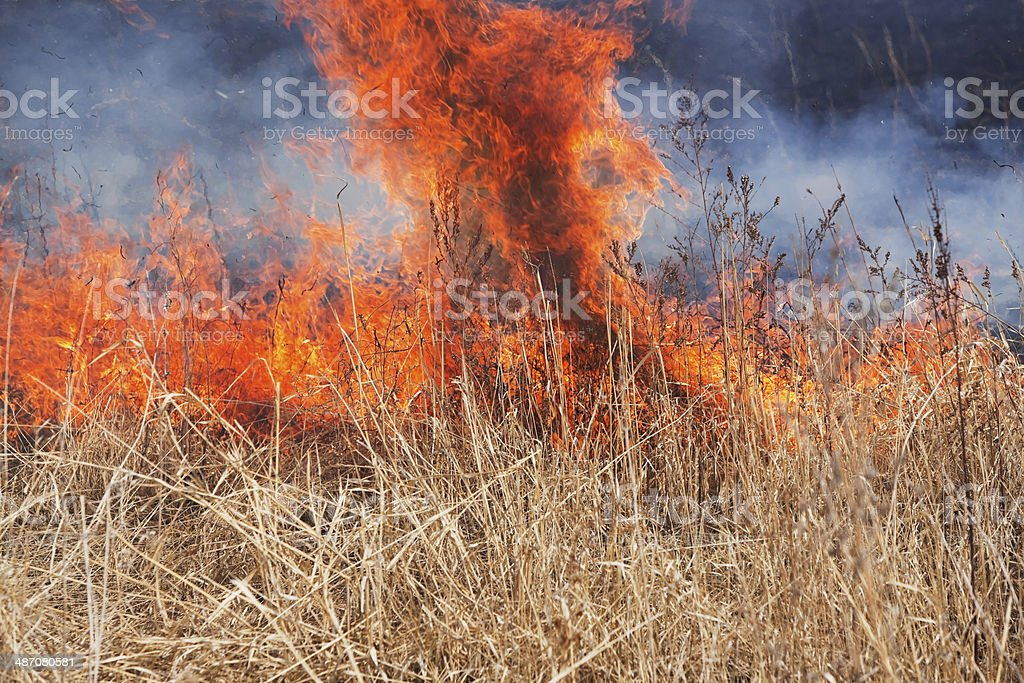 Raging Prairie Grass Fire stock photo
