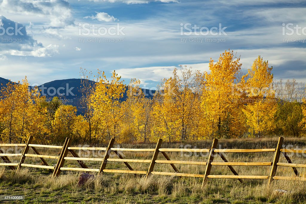 Rail Fence and Yellow Aspen Trees stock photo