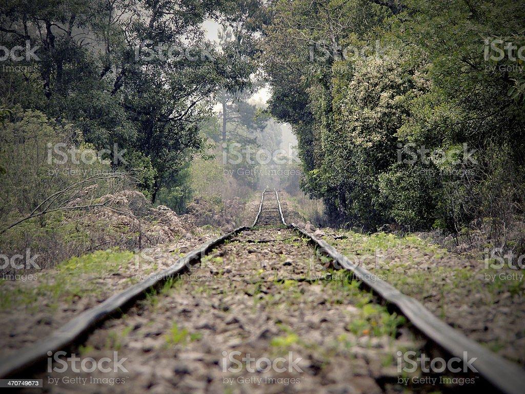 Railroad no túnel de árvores - foto de acervo