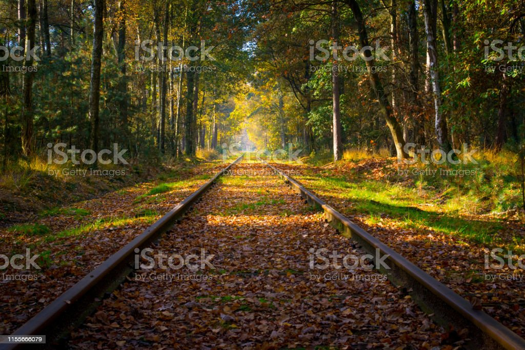 Railroad track through the forest in autumn , vanishing point