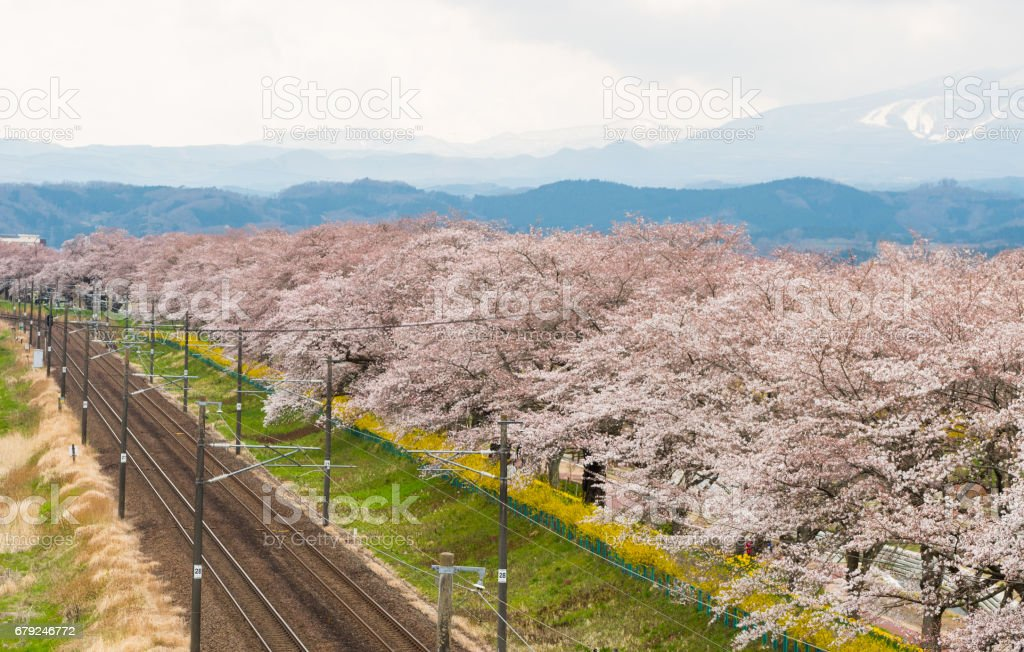 Railroad track.l with a row of cherry trees along the Shiroishi river at funaoaka Sendai, Japan with mountain background. photo libre de droits