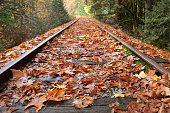 Railroad tracks covered in leaves.