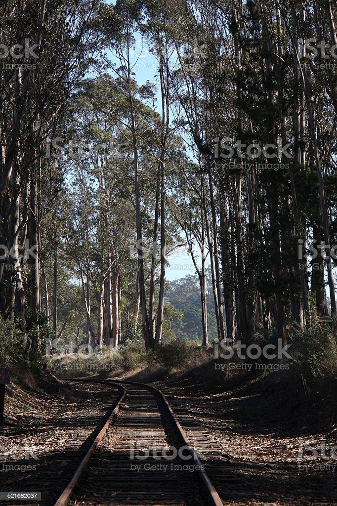 Railroad Tracks Through a Eucalyptus Grove stock photo