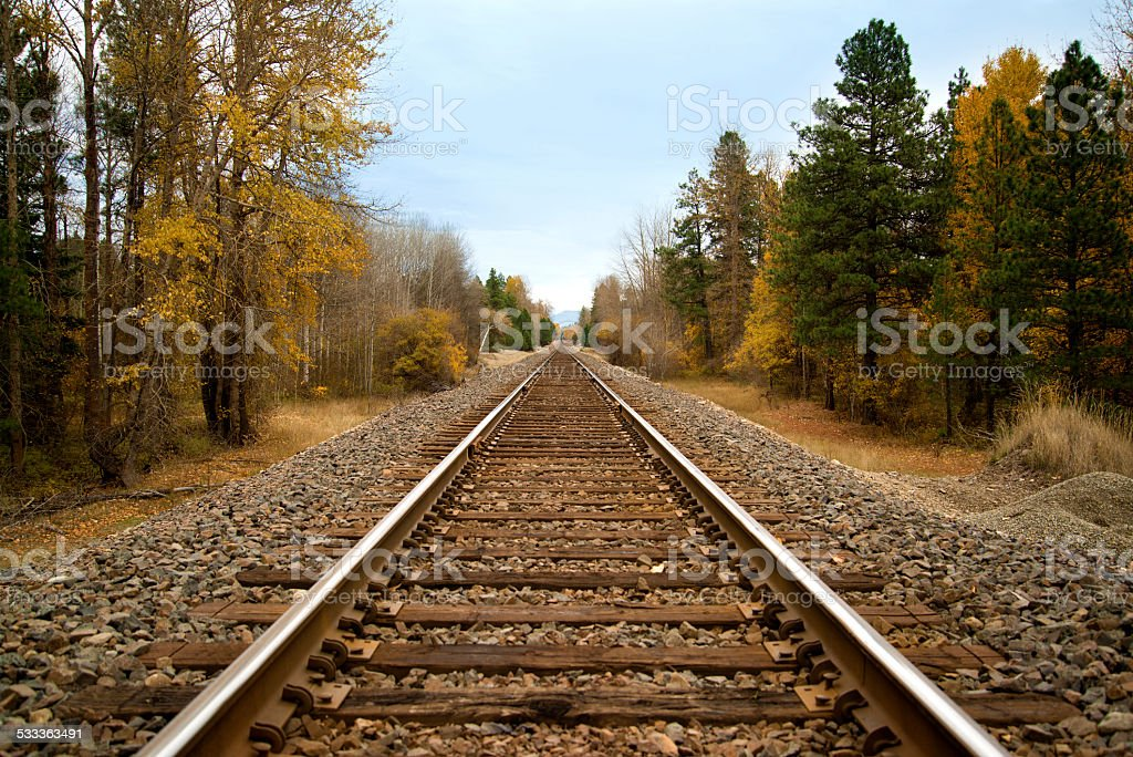 Railroad Tracks Through Forest stock photo