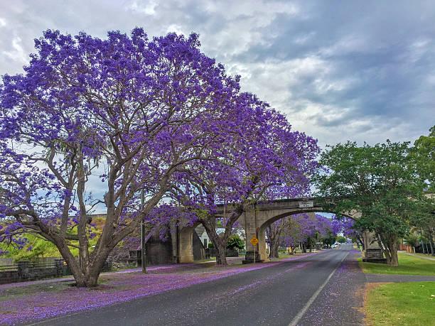 Railway Bridge and Street in Grafton, Australia during Jacaranda Season stock photo