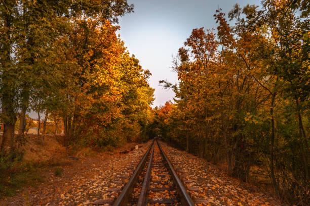 森林中的鐵路圖像檔