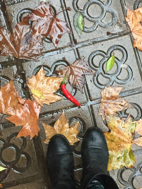 Rain, autumn leaves and chili pepper on the sidewalk
