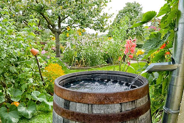 Regen fass im Garten – Foto