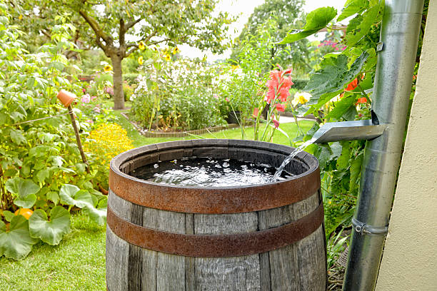 rain barrel in the garden - barrel stock pictures, royalty-free photos & images