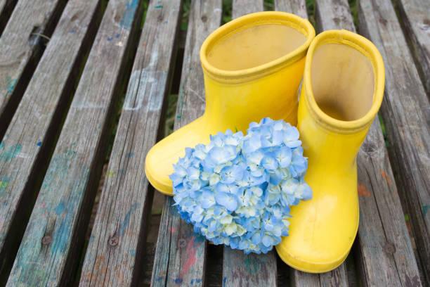 gummistiefel und hortensien - regenzeit stock-fotos und bilder